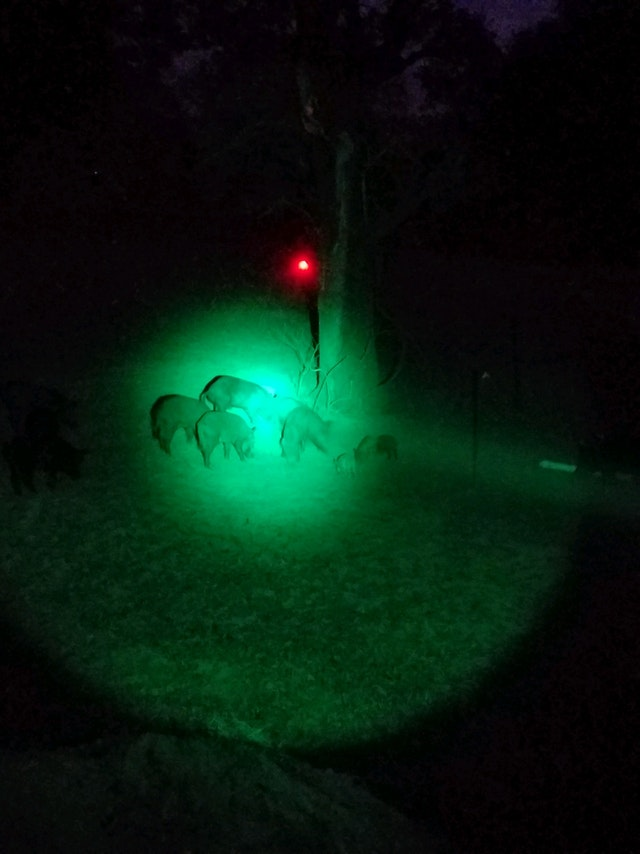 Night hunting with the PATENTED GAME ALERT® Stealth Hunter Kit
