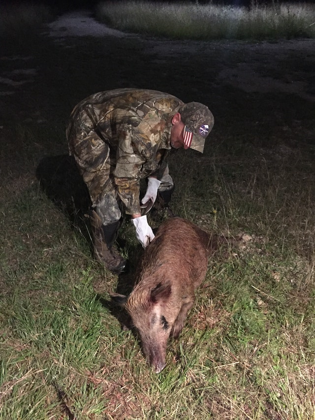 Protect yourself from wild hog disease