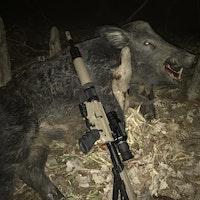Swamp boar