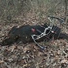 1st kill with the Hoyt