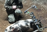 10 year old with bow takes down hog