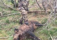 1st pig hunt