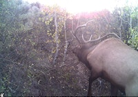Nice elk on remote mountain trail